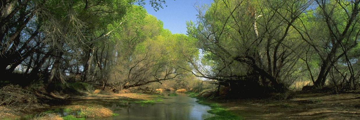 san pedro river.jpg