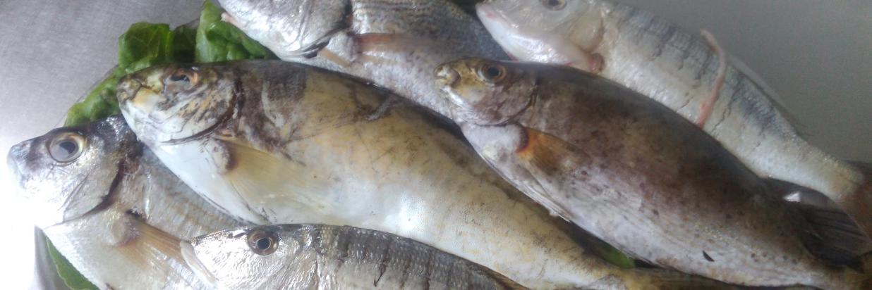 Variety of fish From Pissouri Bay.jpg