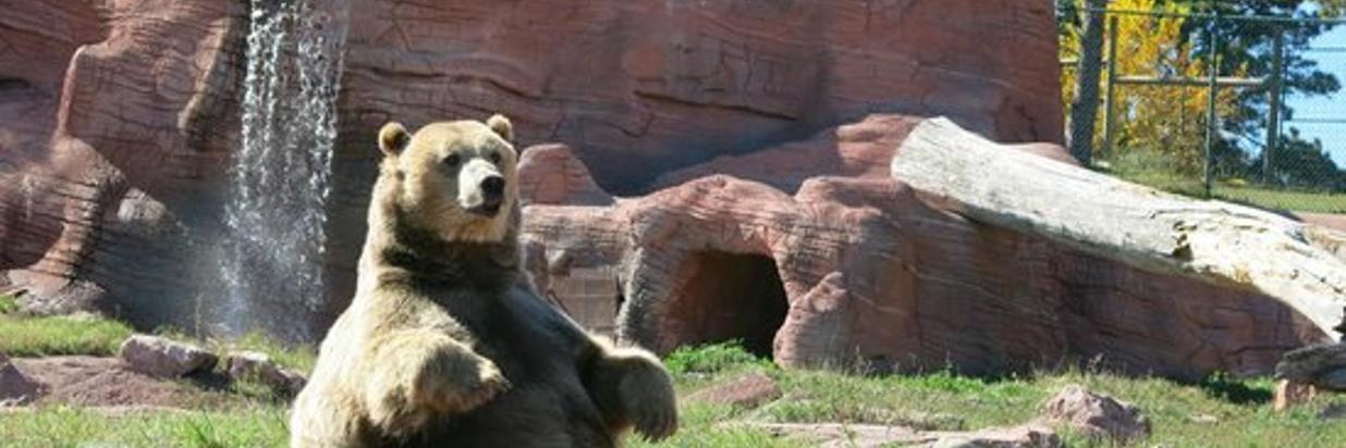 bear-country-usa.jpg