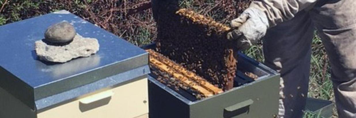 Bee 10.jpg