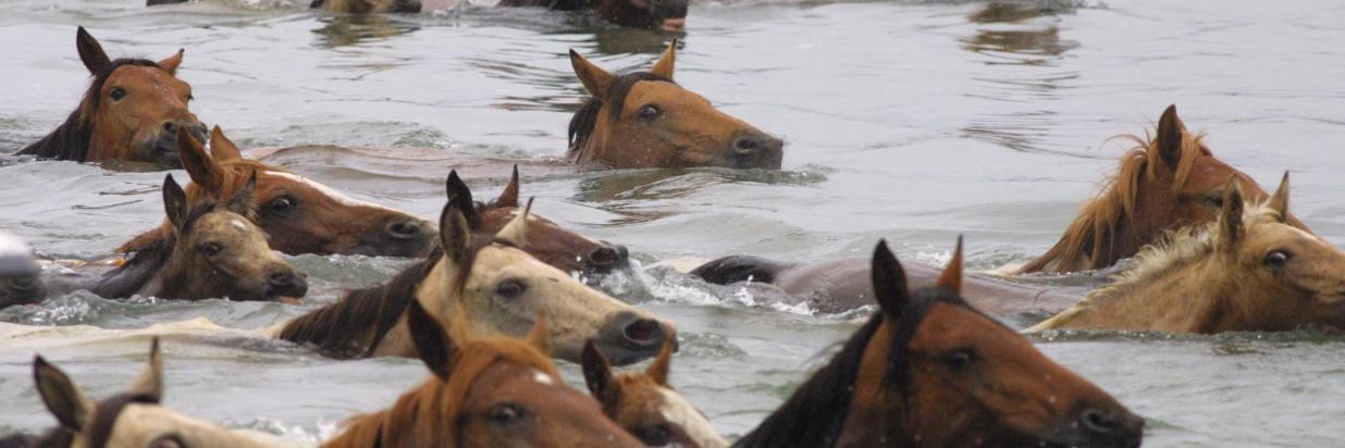 ponies-in-water[1].jpg