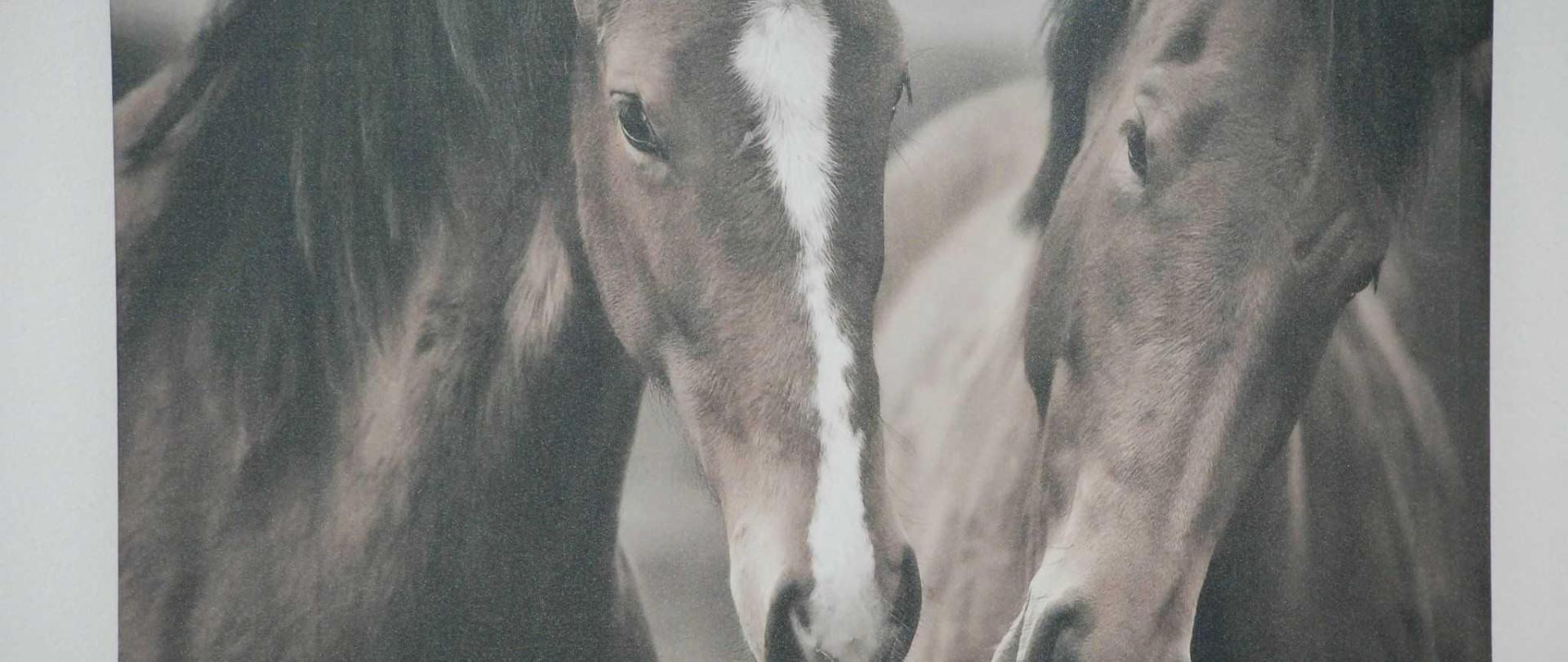 rojus-horses.jpg