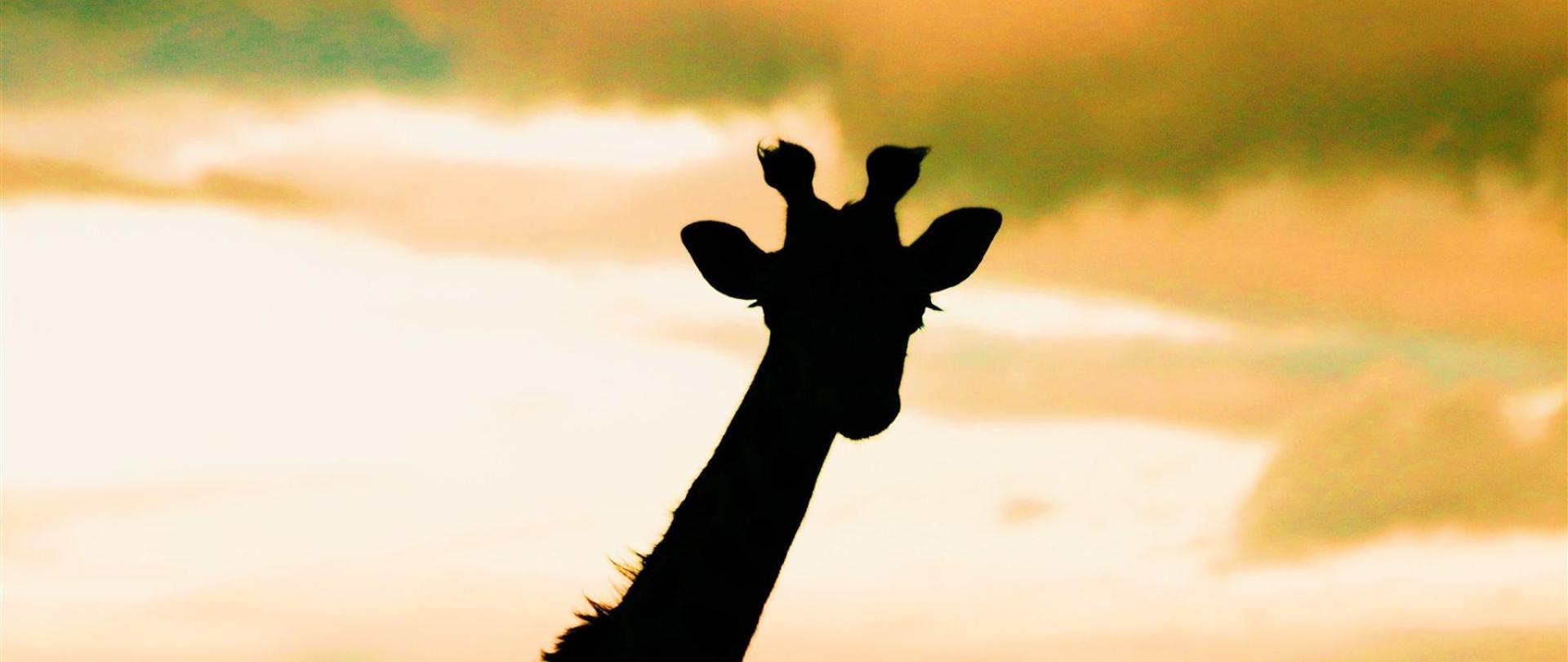 georgie-hennah-giraffe-instagram-aug-17.JPG