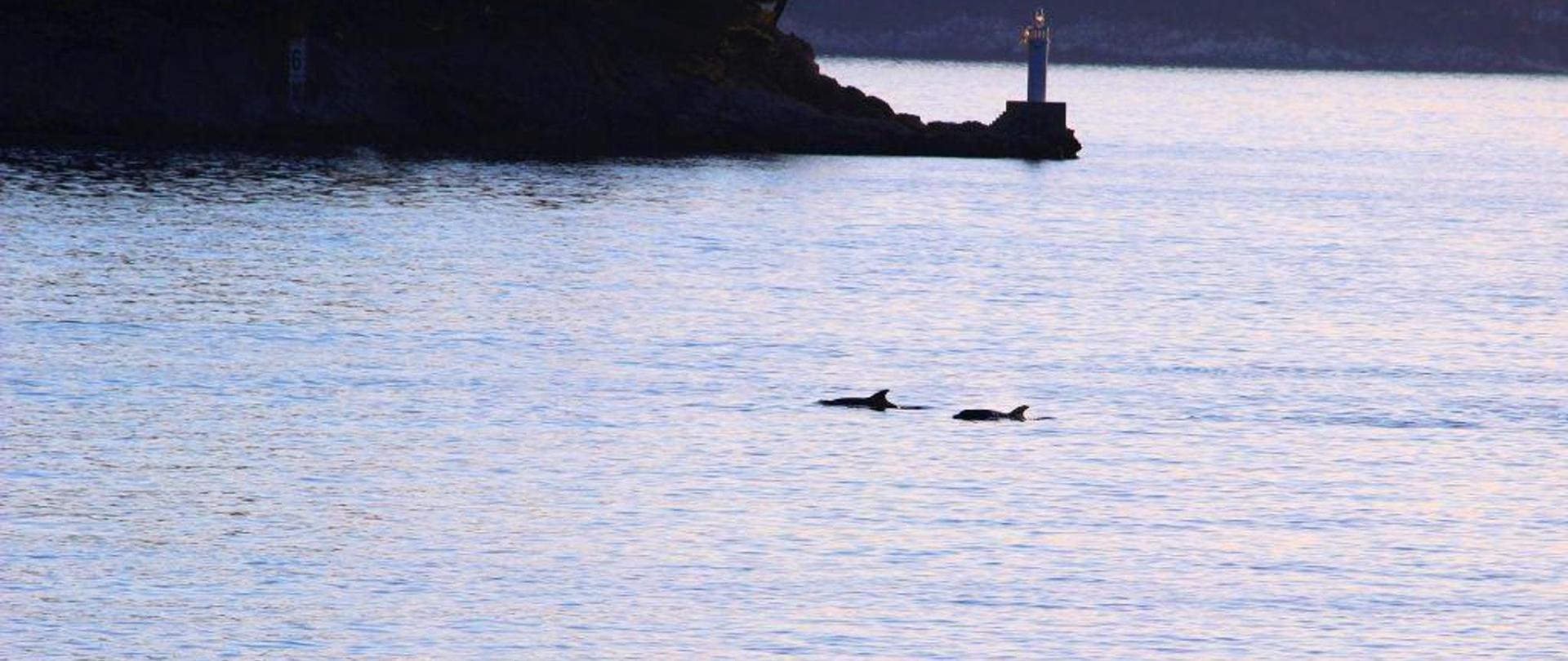 delfin b