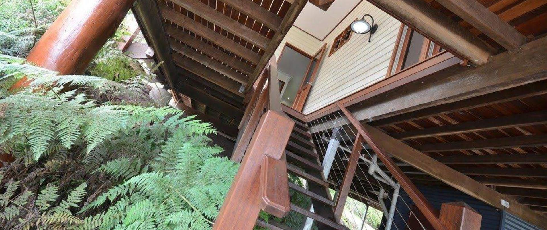 stairs-ferns-2.JPG