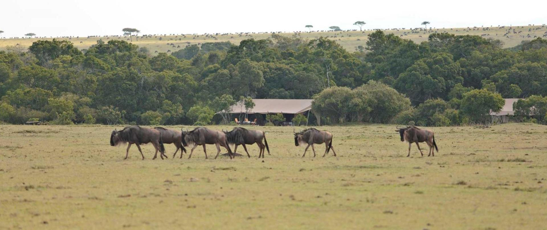 saruni-wld-gnu-and-zebra-surround-us.jpg