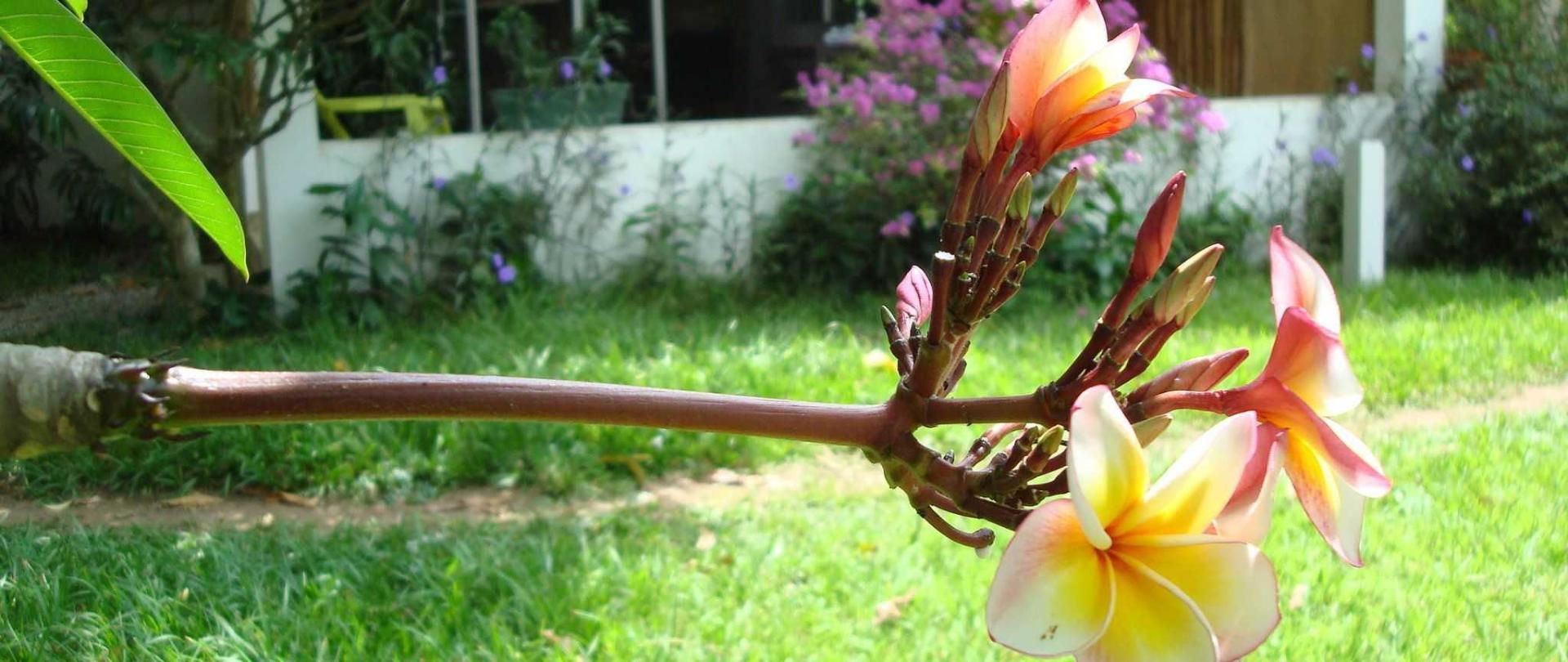 villa-mango-063.JPG