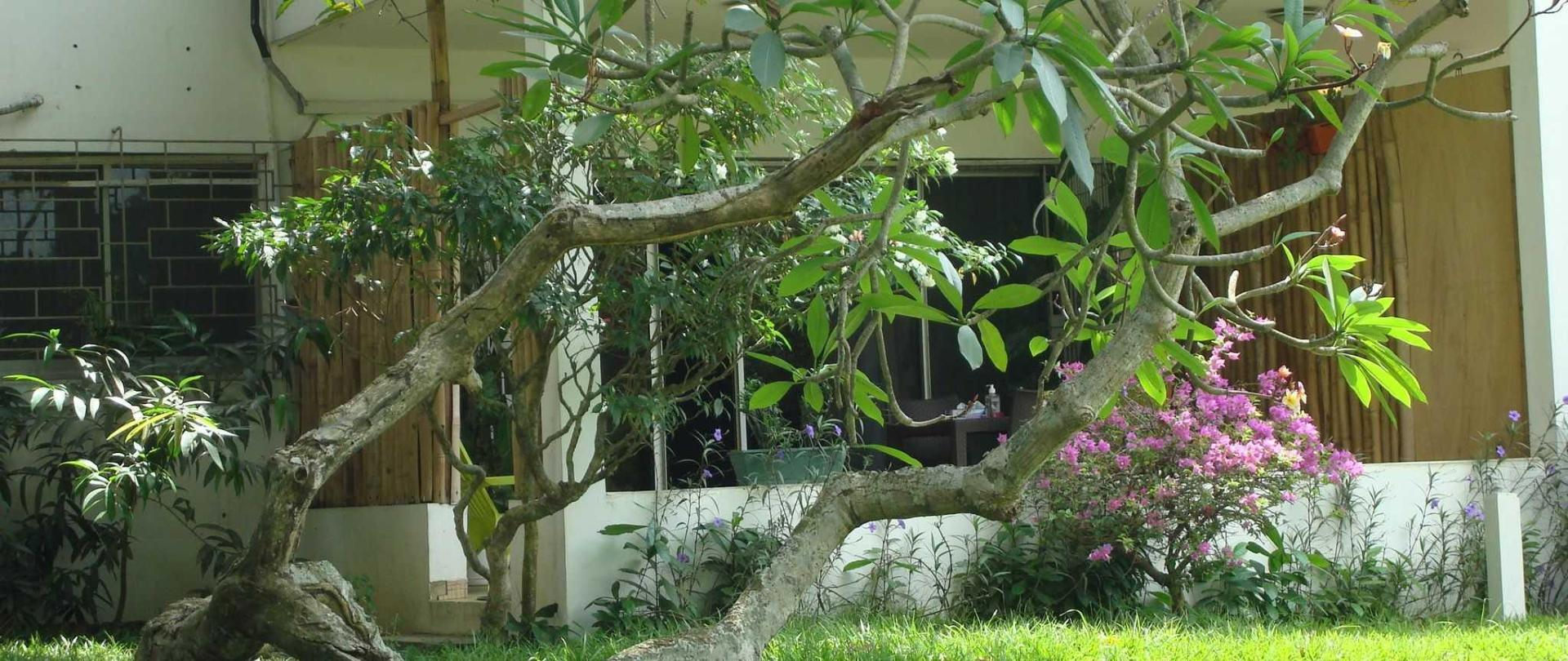 villa-mango-062.JPG