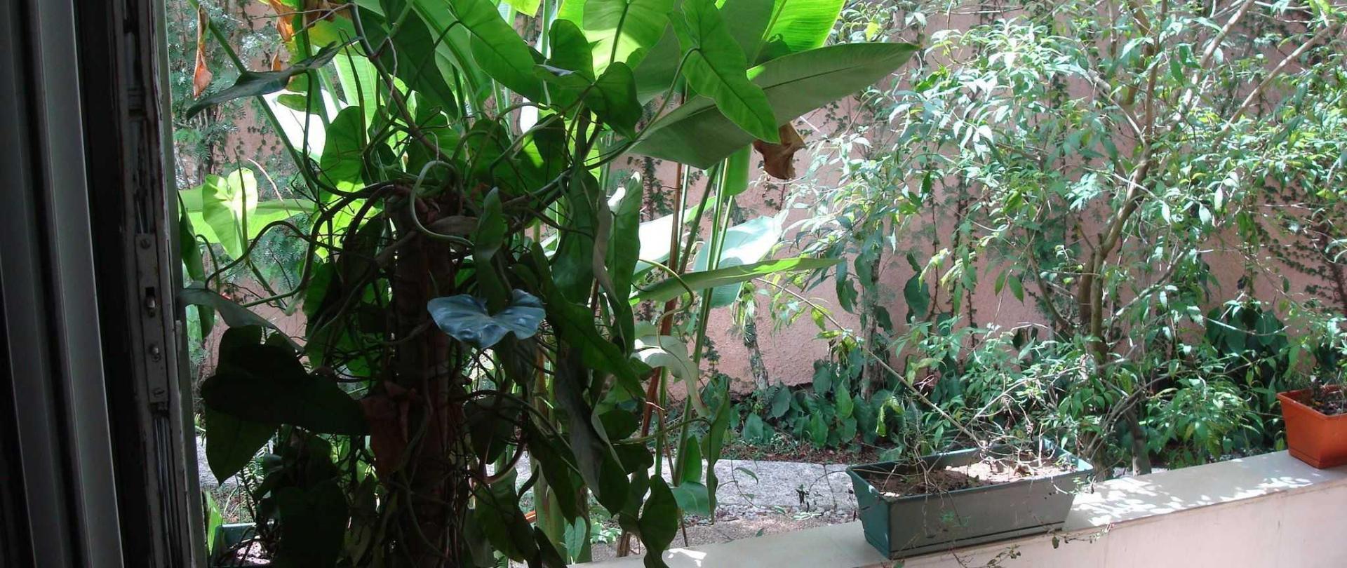 villa-mango-073.JPG
