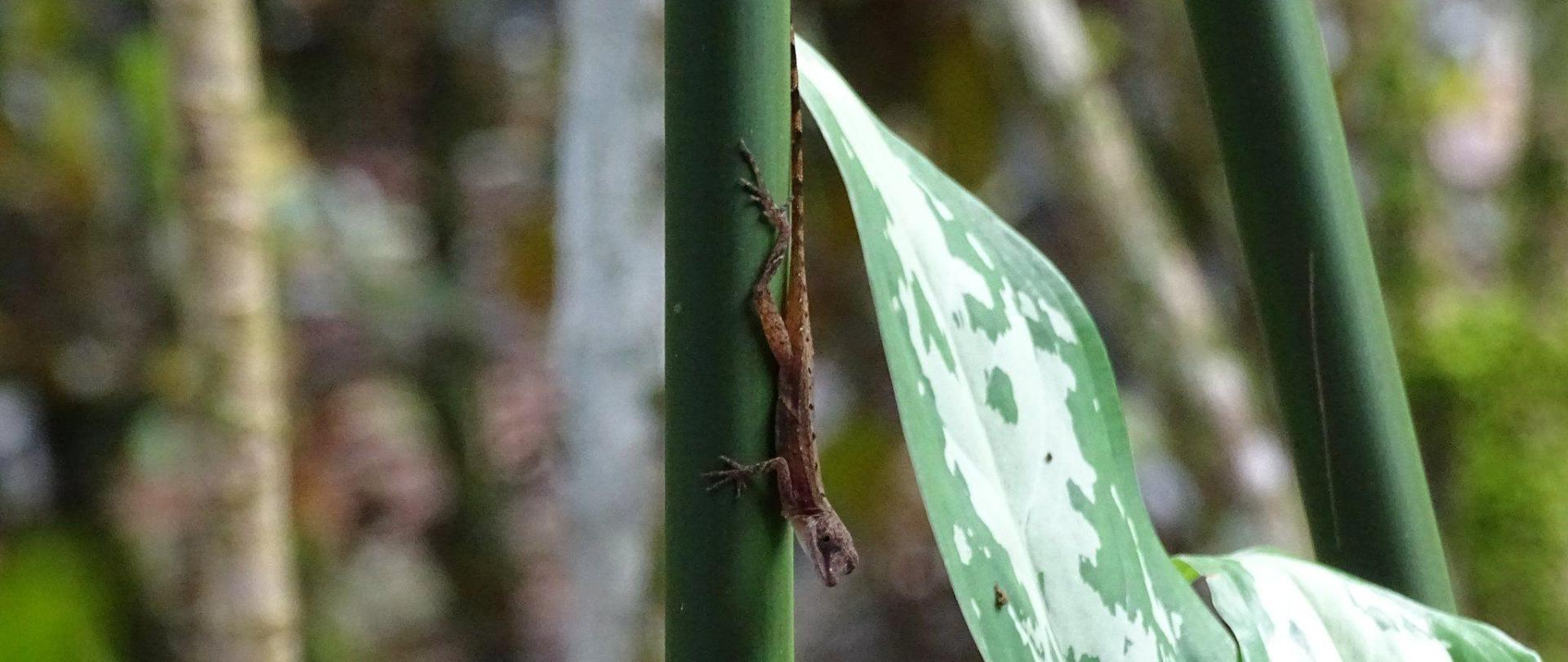 Lizard in our garden