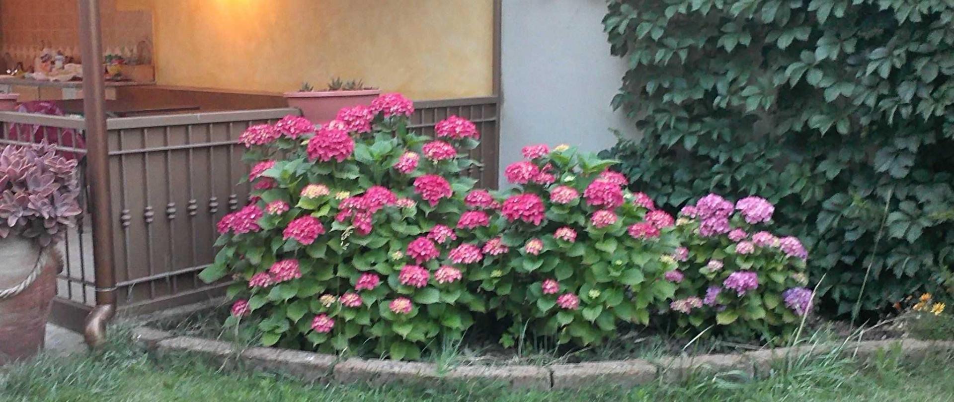 giardino-1.jpg