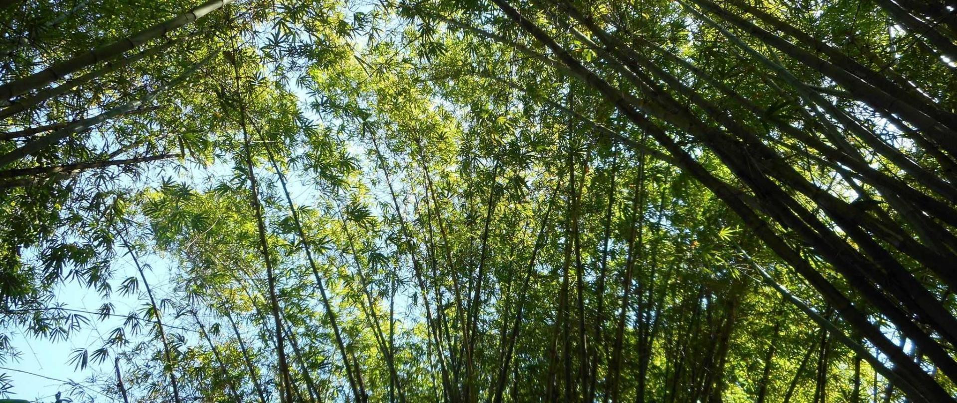 bamboo-3.JPG