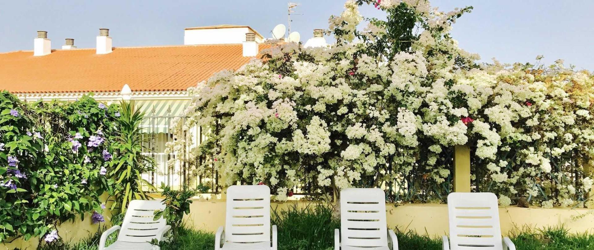 garden-bouganvile.jpg
