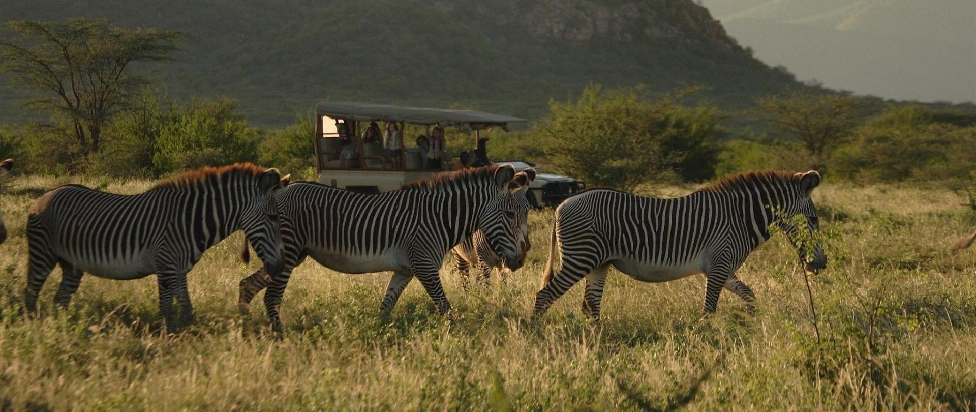 saruni-car-and-grevy-s-1.jpg