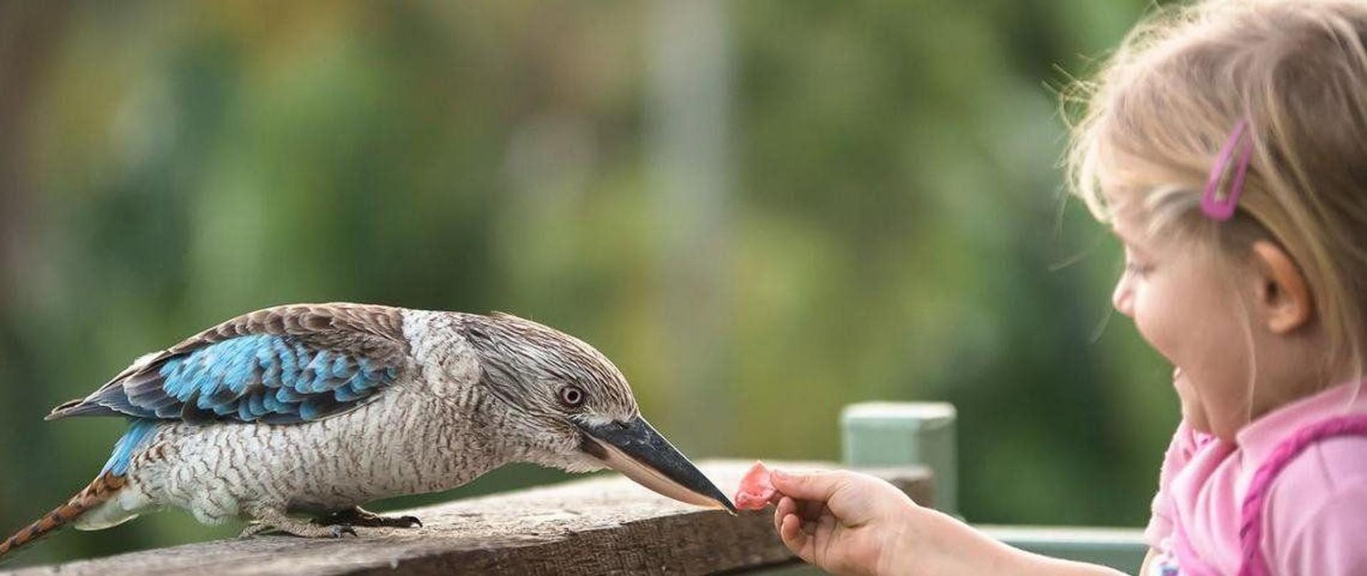 feeding-the-kookaburra.jpg