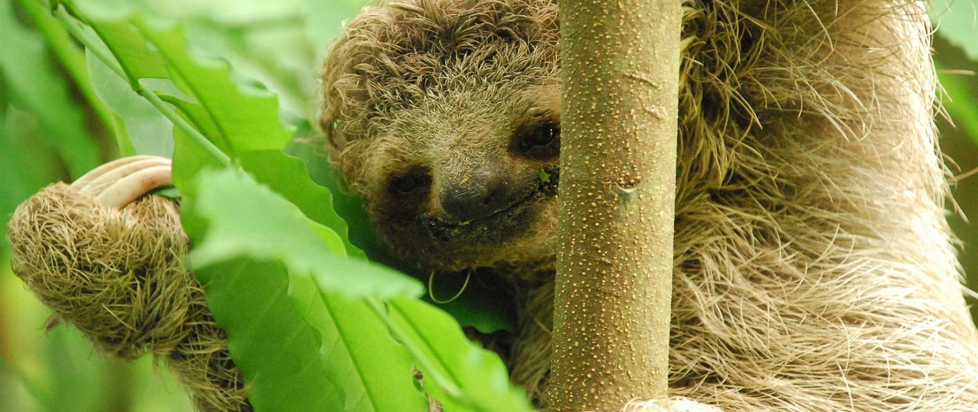 baby-sloth-300-dpi.jpg