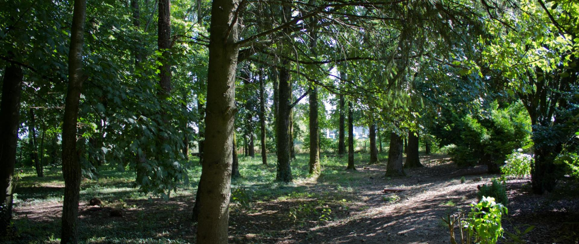 legno Domaine.jpg