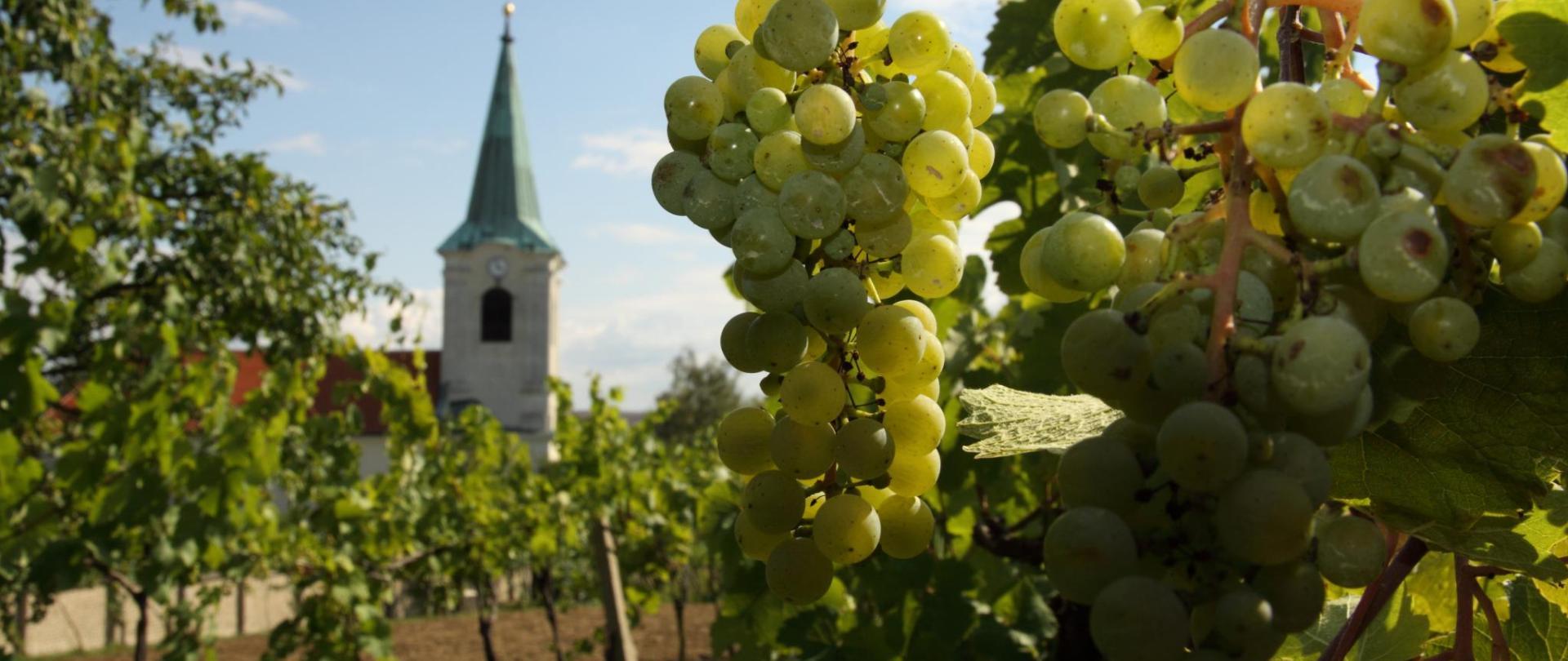 sady-kostelik-vinice26.JPG