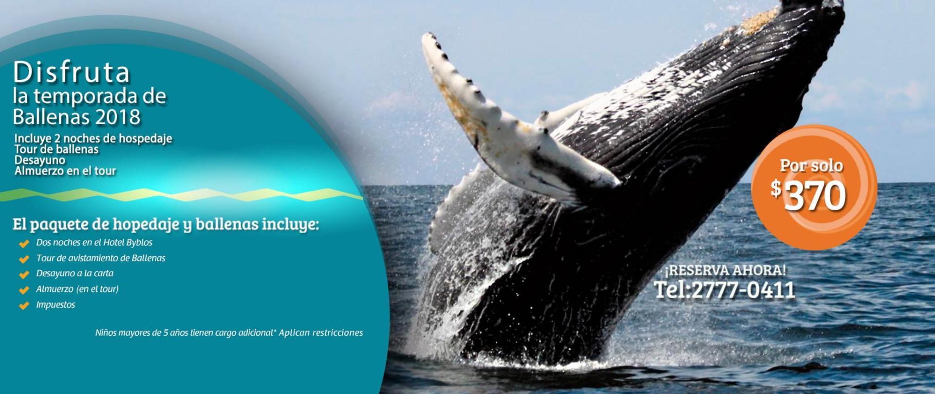 portada-ballenas.jpg