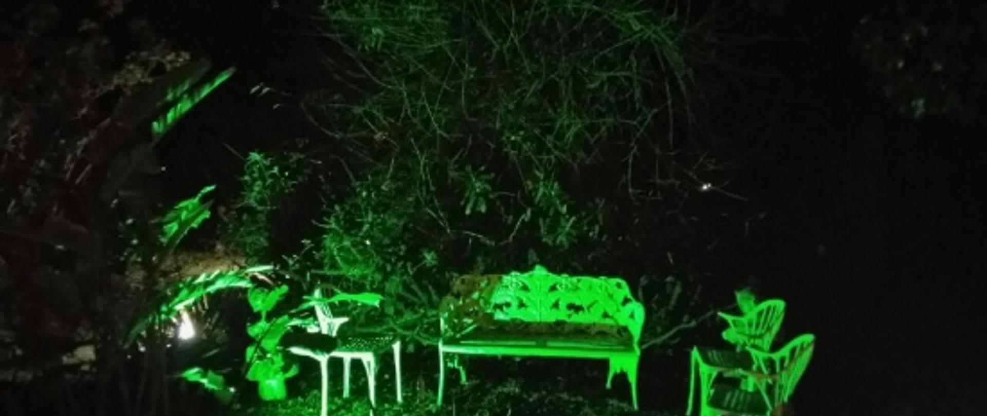 jardim noite.jpg