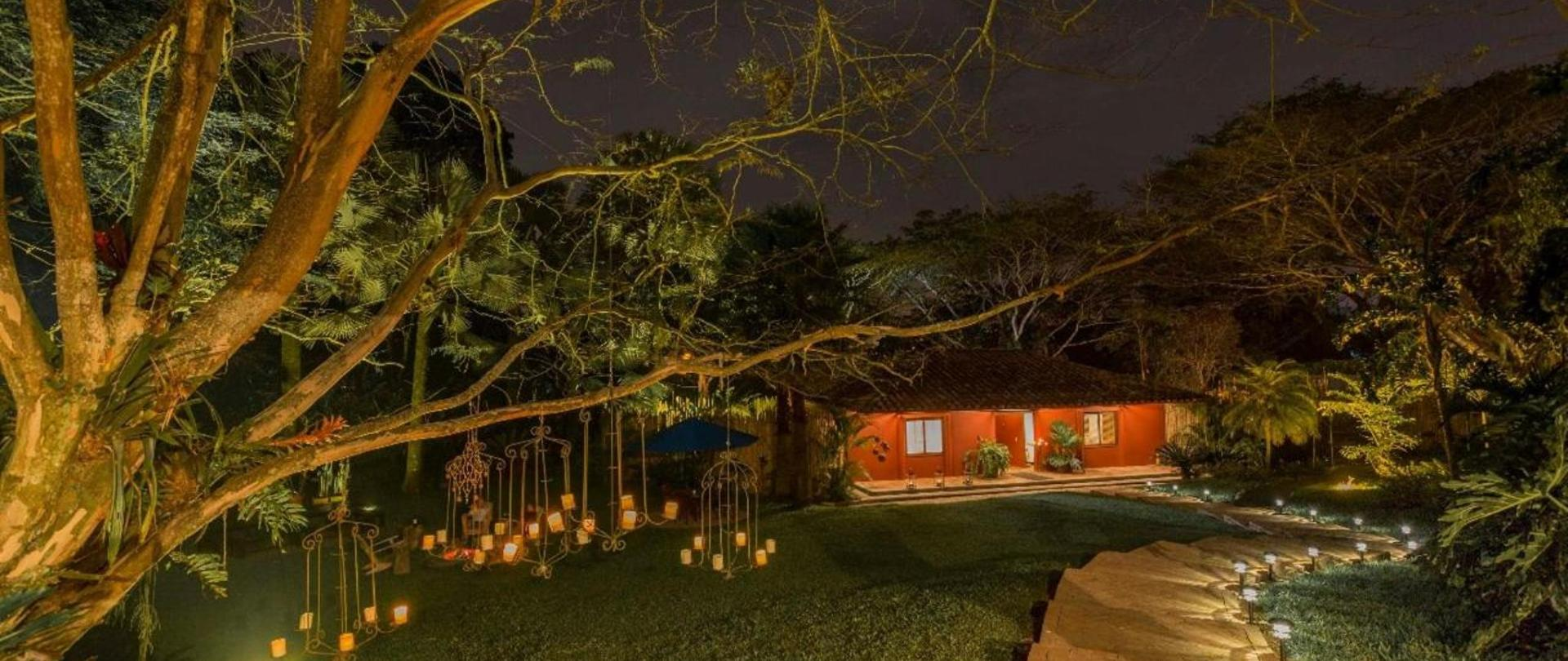 Nuestros arboles en la noche.jpg