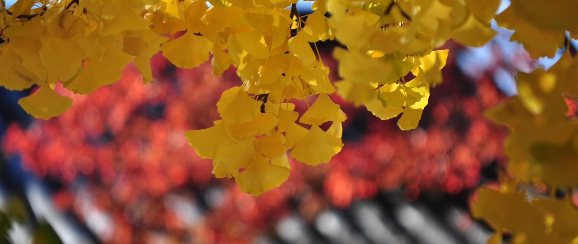 autumn image100.jpg