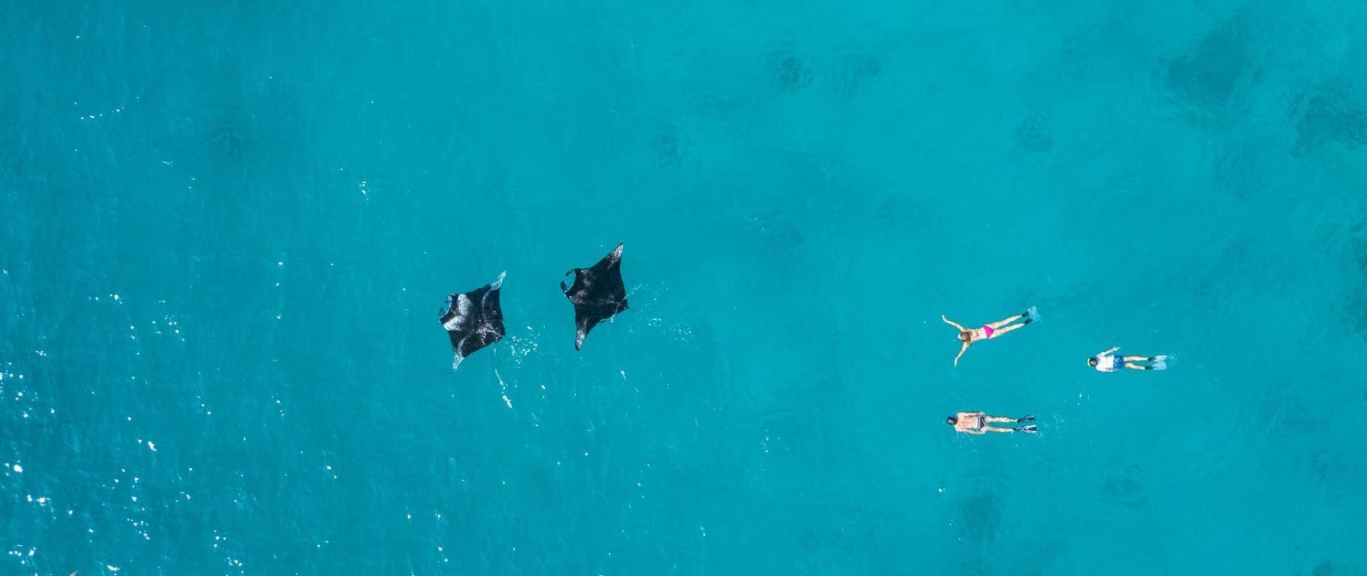 Manta ray snorkeling