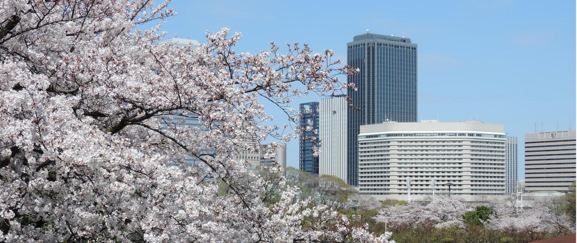 Sakura Hotel.jpg
