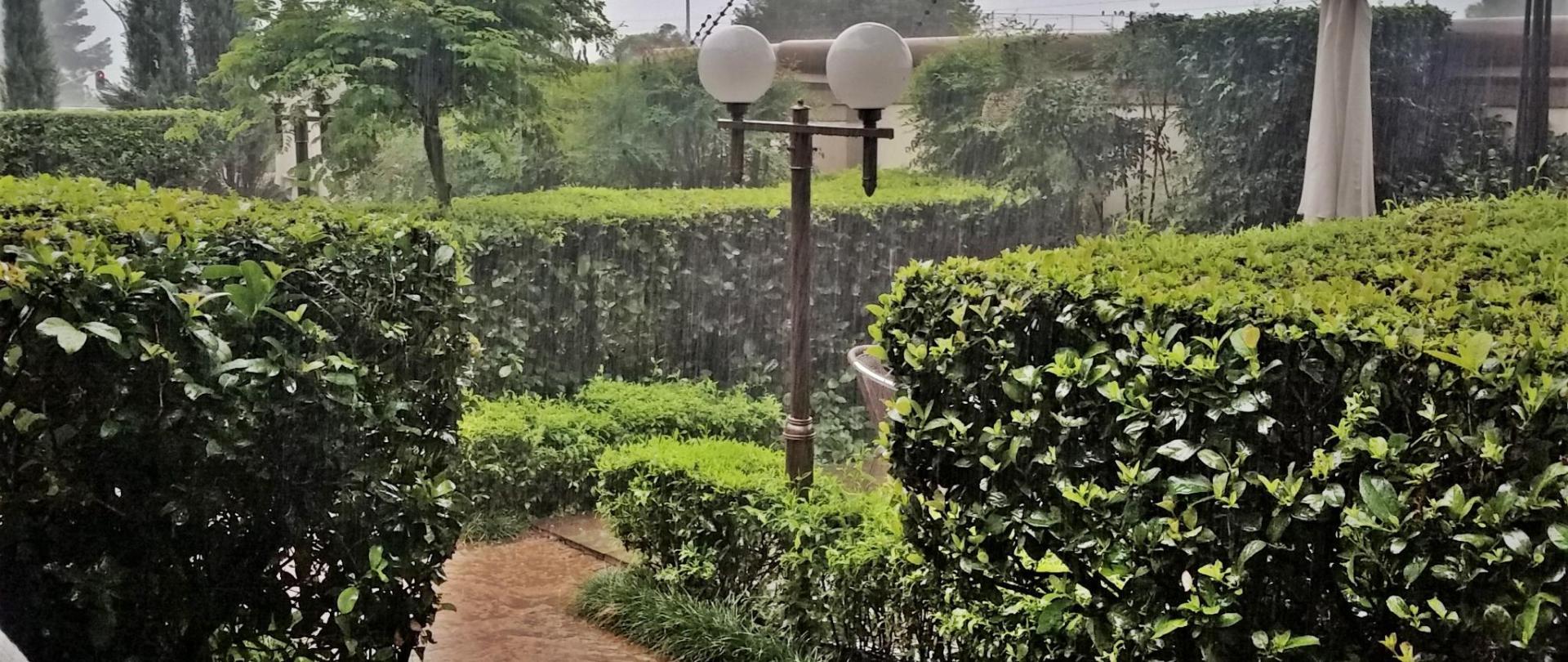 Rain in garden 3  2017.jpg