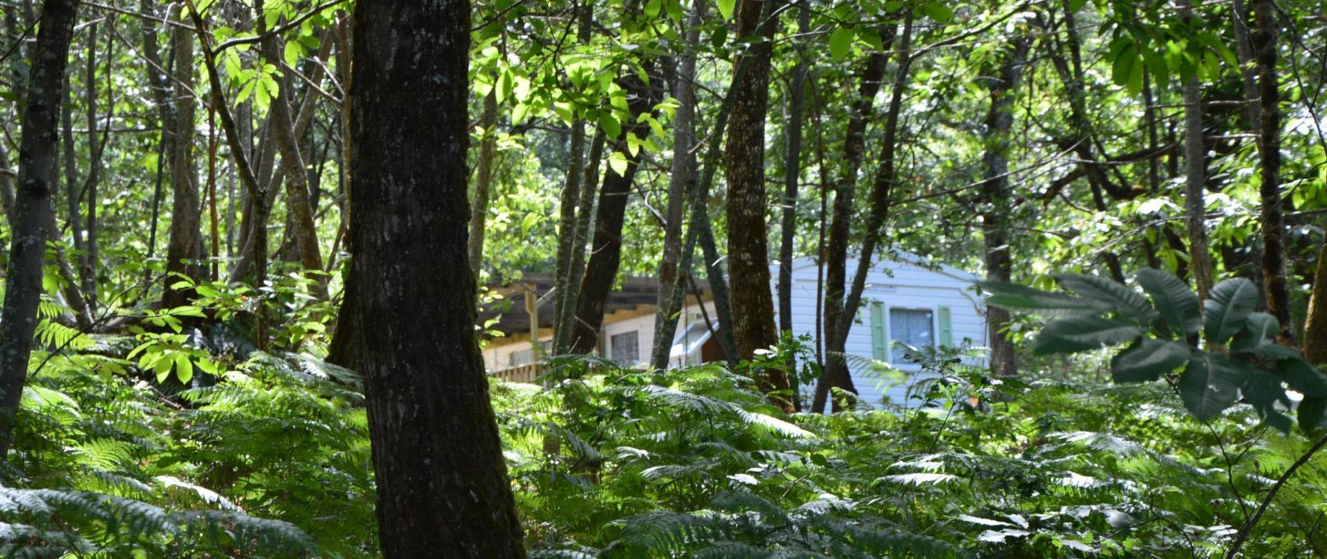 Camping Etang Vallier