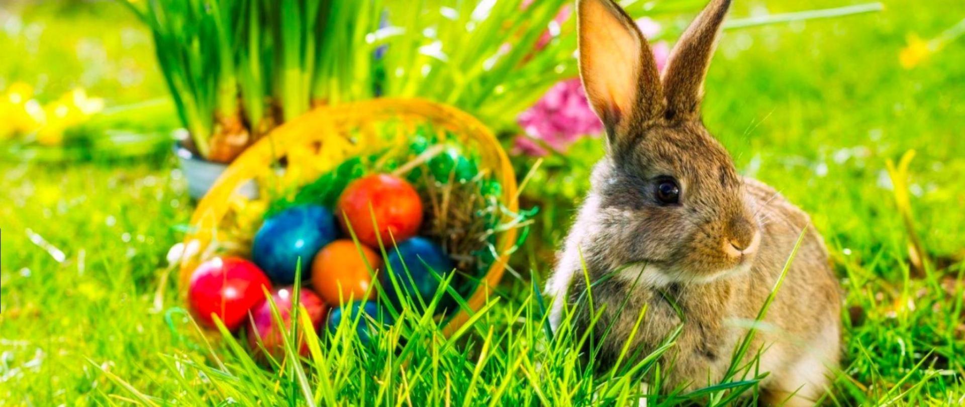 Coniglio di pasqua.jpg