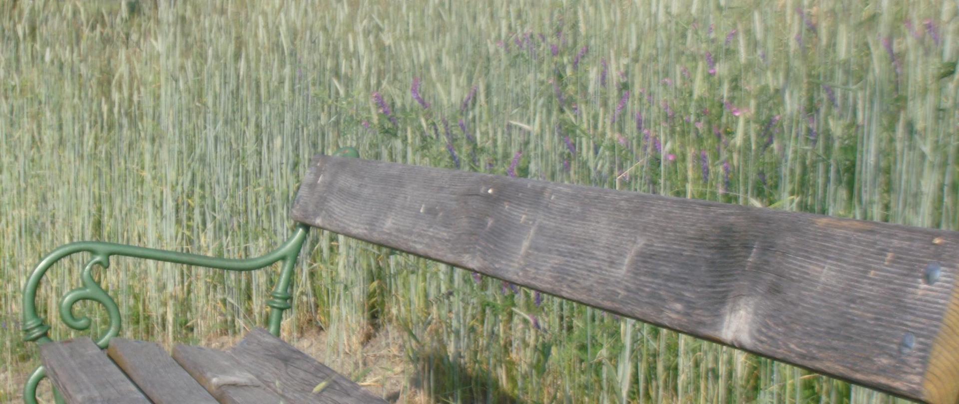 Wiesenblumen (7).JPG