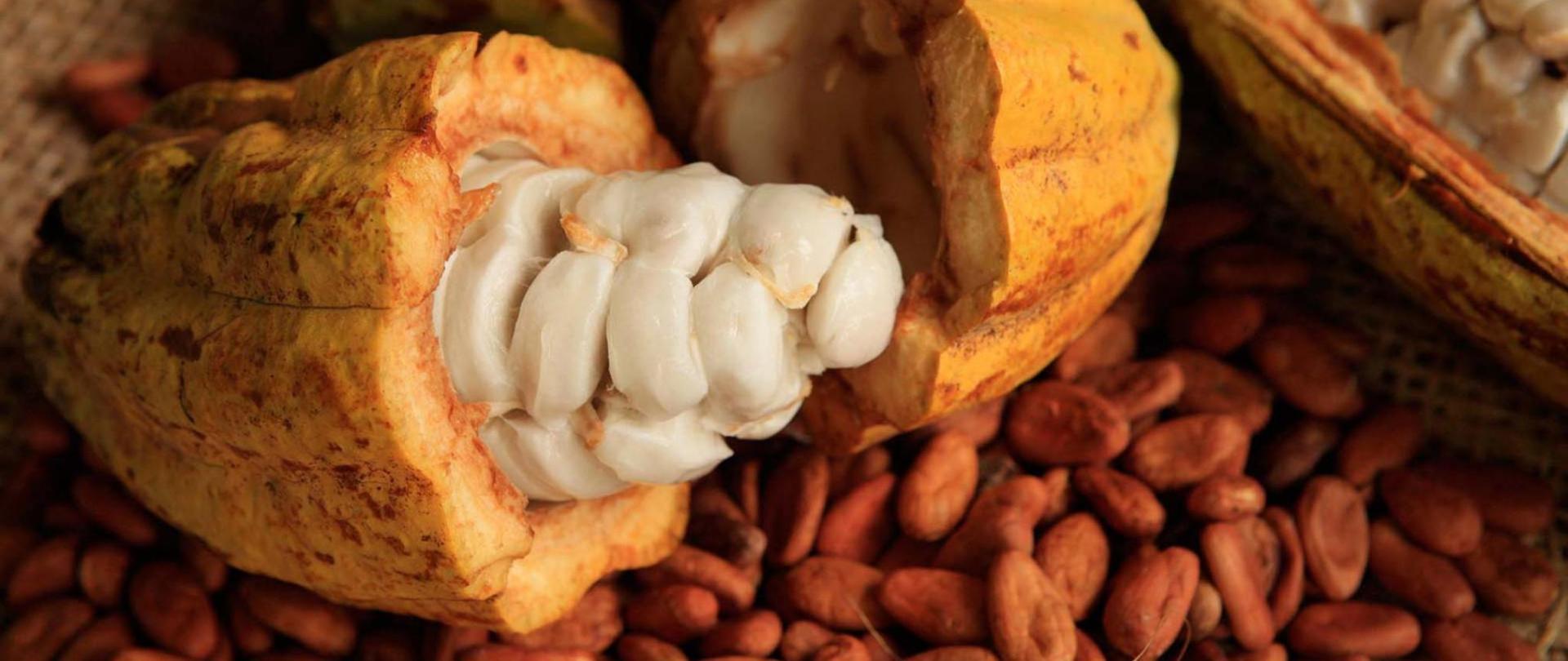 actividades-principales_tabasco_villahermosa_disfruta-comalcalco-del-cacao-al-chocolate_04-min.jpg