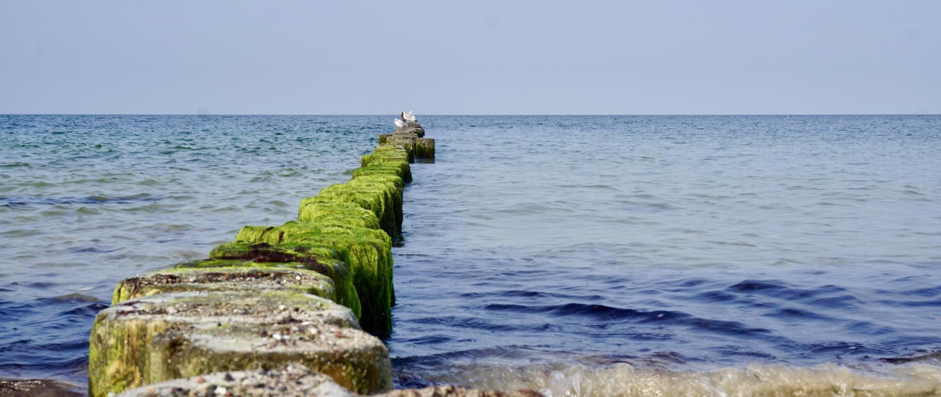 rugen-island-1738977.jpg