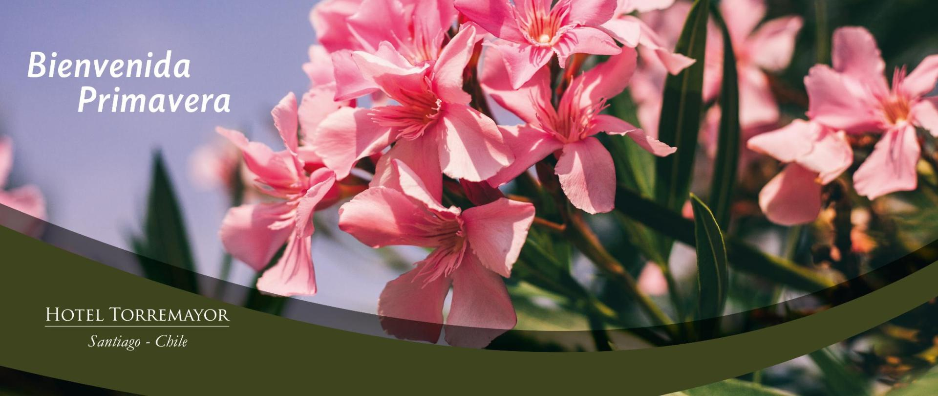 primavera-web-lyon.jpg
