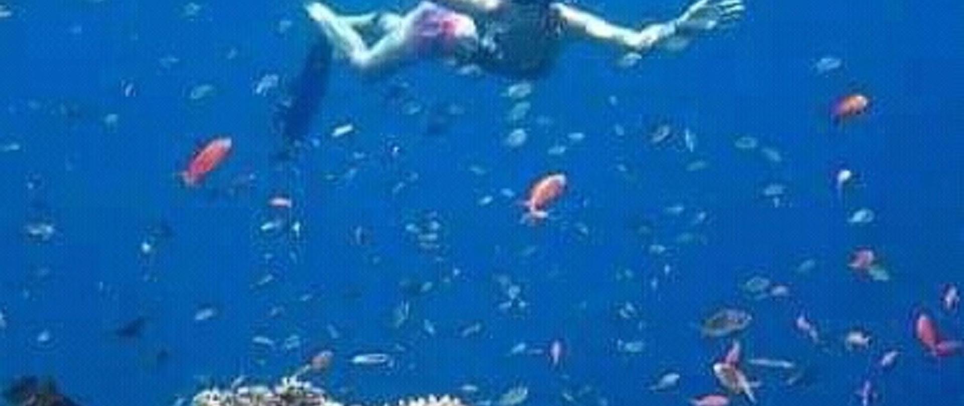 free diver.jpg