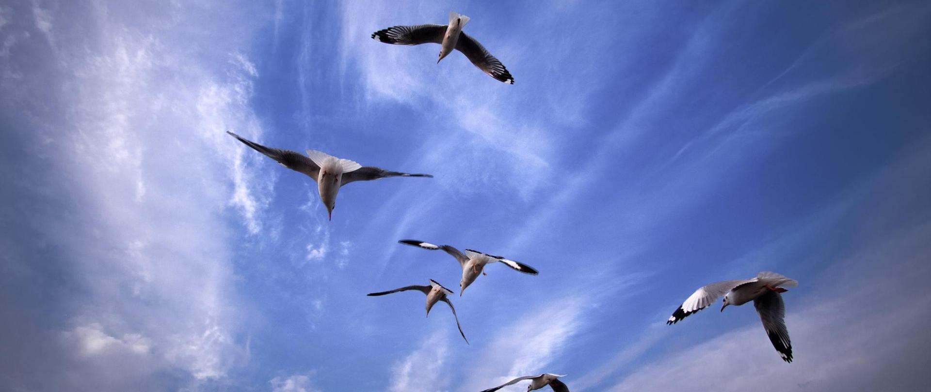 seagull-669907_1920.jpg