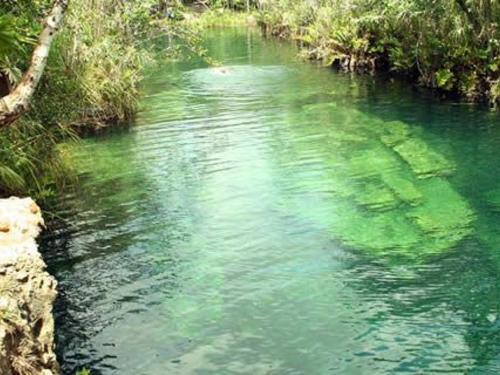 Cenotes en vivo