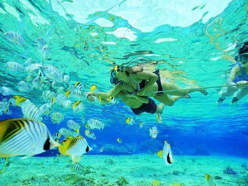 Snorkeling & Scuba Diving