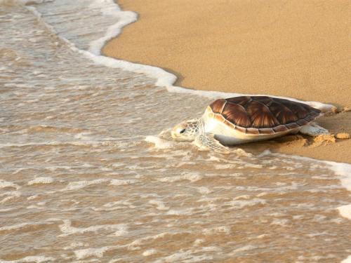 มูลนิธิอนุรักษ์เต่าทะเลหาดไม้ขาว
