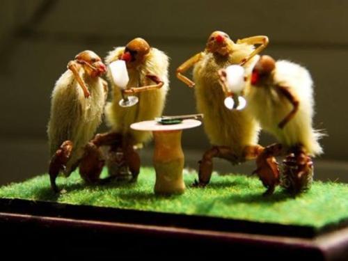 Chinese Hairy Monkeys