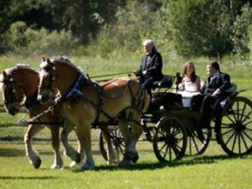 Horeseback Riding, Carriage, and Wagon Rides