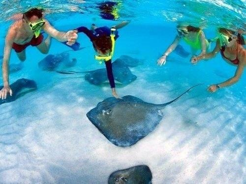 Swimmin' with the Stingrays!