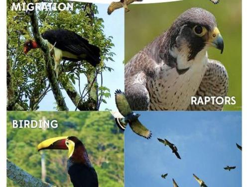 Birdwatching Seasonal
