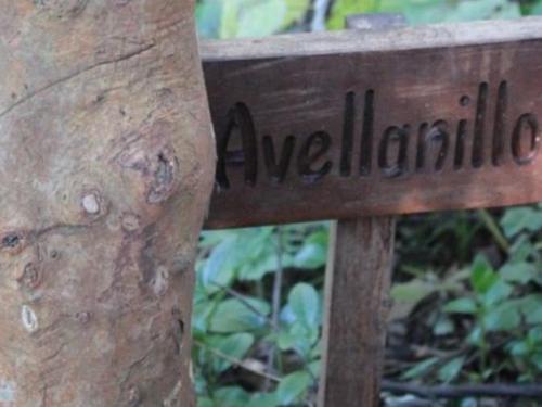 Caminata Parque Antumalal