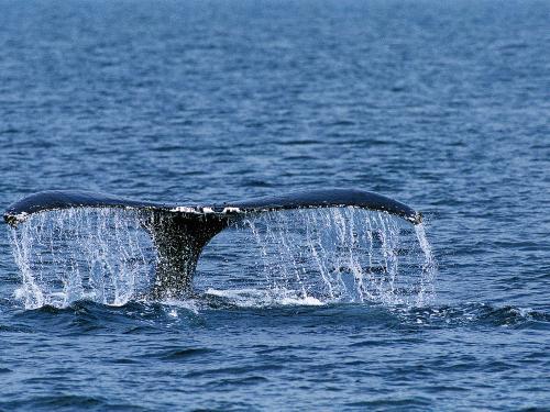 Bodega Bay Experience