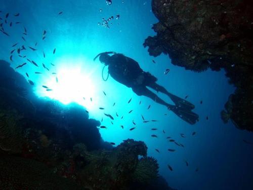 Dive Excursions