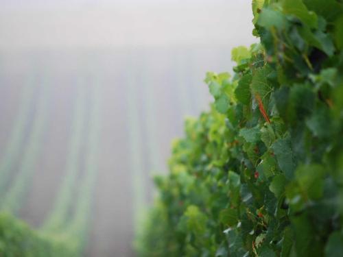 vinprodusenter