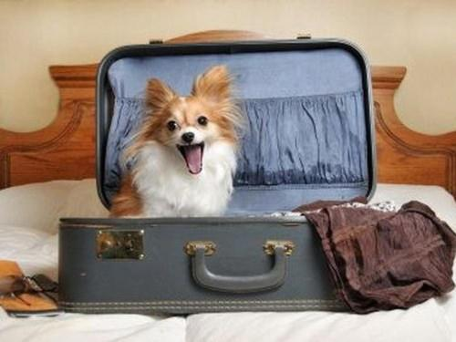 dog-excited-to-be-in-hotel-2.jpg