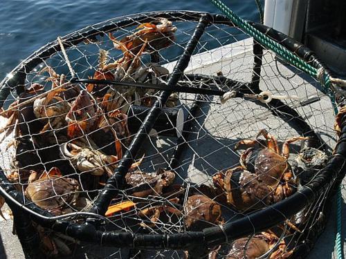 Crab Pot and Crab Boat Rentals